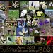 365: April Collage