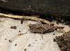 Patio Life: Groundhopper