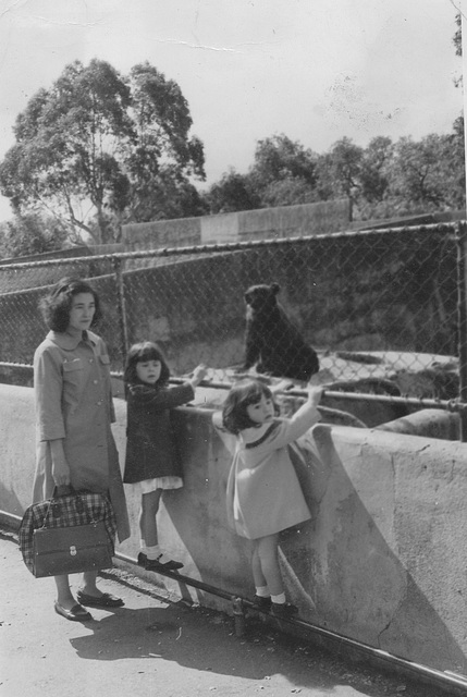 1965 ? - at Melbourne Zoo
