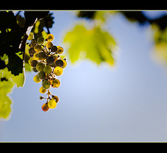 Glowing Grapes in Jacksonville