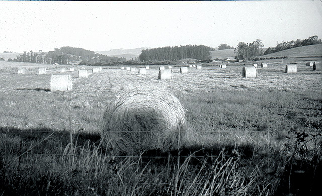 Bales in Two Rock Valley