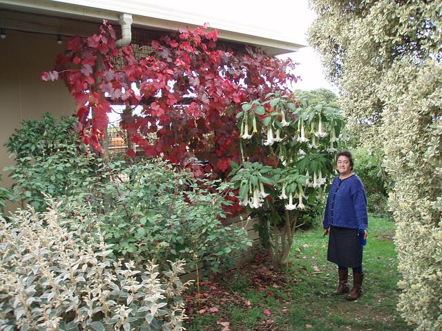 trumpet lilies & autumn grapevine