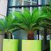 Pot Palms