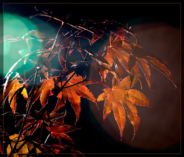 Fall Colors with Sun Flare