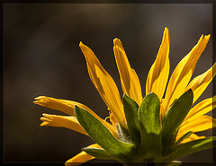 Behind a Mule's Ear...and a Lesson to Learn! :D