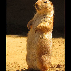San Francisco Zoo: Prairie Dog, and Janet Has Officially LOST IT!!