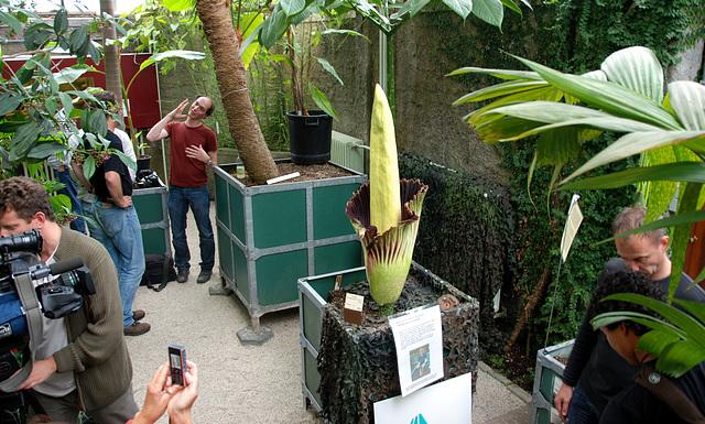 A visit to the Botanical Gardens of Leiden University: Amorphophallus Titanum