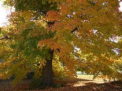 Bristol Tree