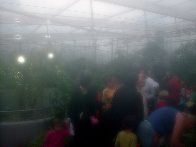 A visit to Artis (Amsterdam zoo): inside the butterfly house (camera fogged up)