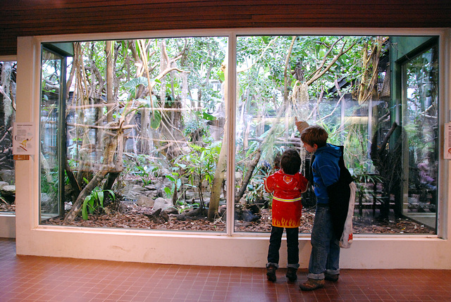 A visit to Artis zoo
