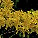 Gelb - Yellow - Jaune