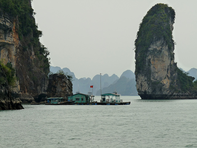 Shrimp Fishing in Ha Long Bay