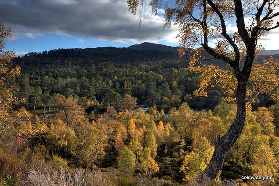 Autumn in Glen Affric - HDR