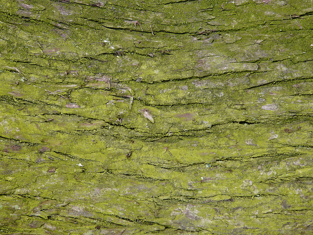 Moss on Tree Texture