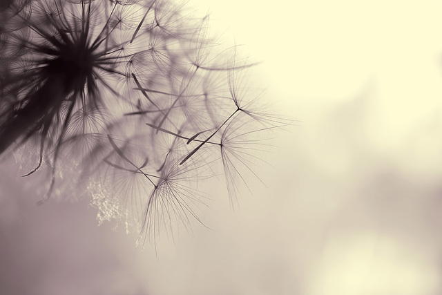 """150/365: """"A Dream Is a Wish Your Heart Makes"""" ~ Cinderella"""