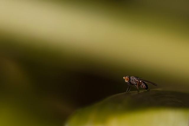 I Am But a Tiny Fly