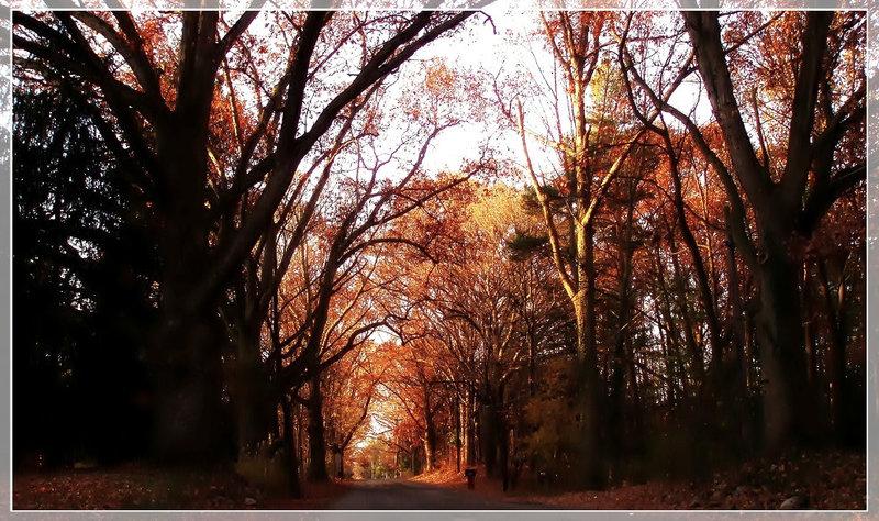 Cognitive study of Autumn colors