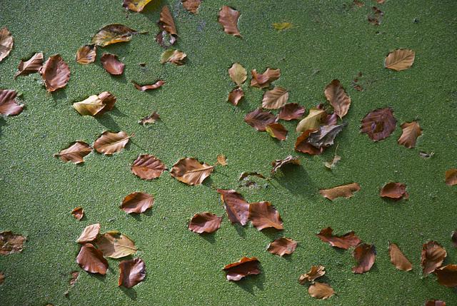... das ging in die Grütze / green carpet