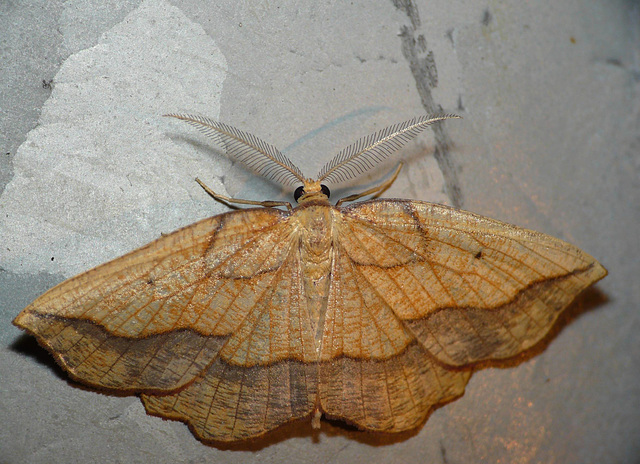 Bordered Beauty -Top