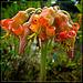 Weirdo Orange Flower