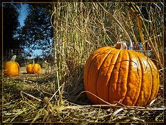 Pumpkin Patch Time!!