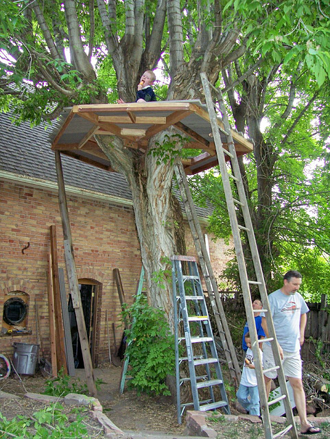 New treehouse under construction (protective siderails to be added)