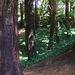 Woodland Again