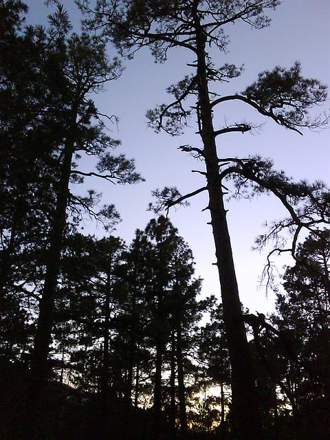 Mount Lemmon, on the Sunset Trail