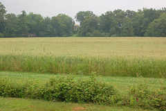 Venustemplo malantaŭ grenkampo, sur digo kun arboj (Venustempel hinter einem Feld, auf einem Wall mit Bäumen)