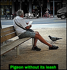 Bench-sitter on Gal-la Placidia and pigeon pigeon without its leash