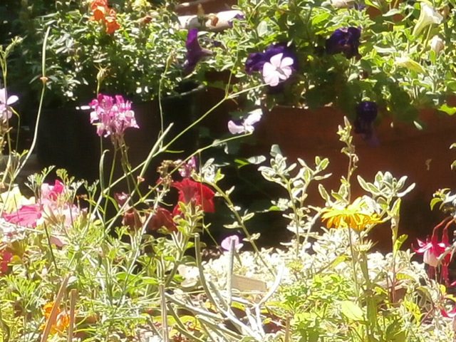 Riot of colour in the driveway