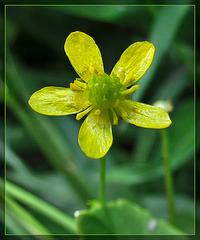 Tiny Yellow Blossom