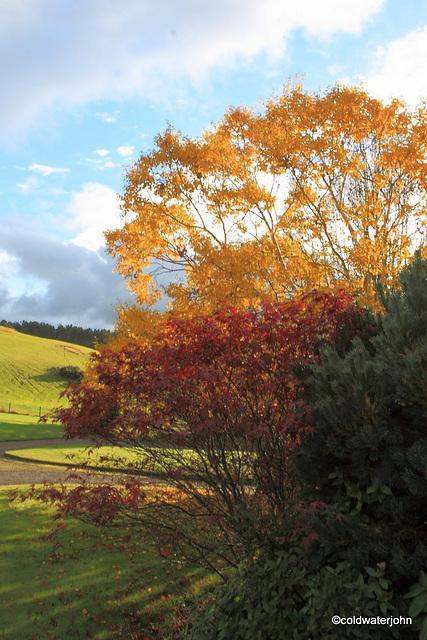 Sunshine and Autumn colours