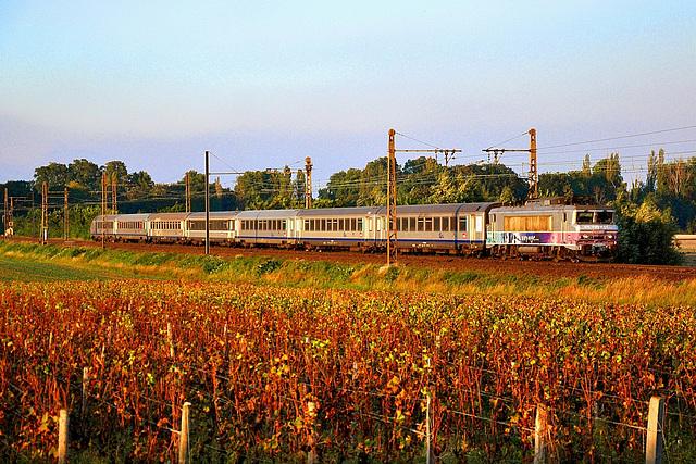 Dans les vignes au soleil couchant...