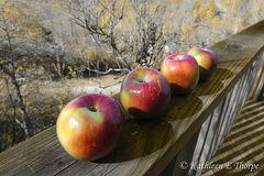 Harvest Jewels - Kerstin Frank Texture