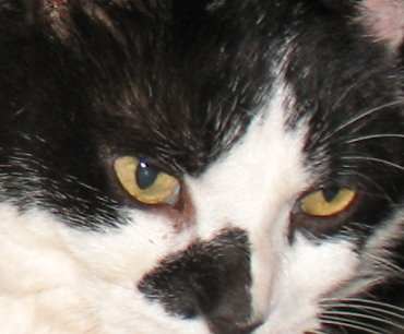 What cat-thought               is in those eyes ?