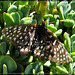 Butterfly on Succulents