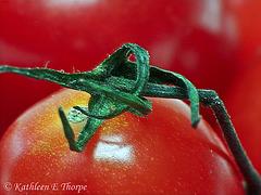 Tomato and Vine Macro