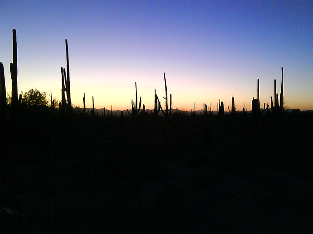 Sunset, with cactus.