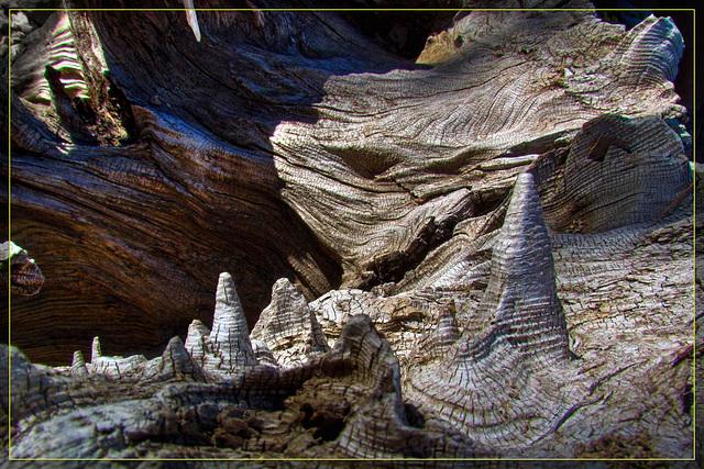 Burl Stalagmites
