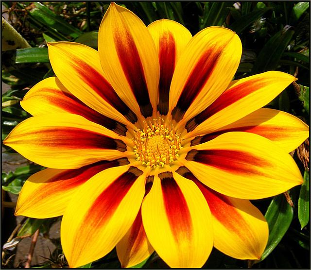 Flora 017