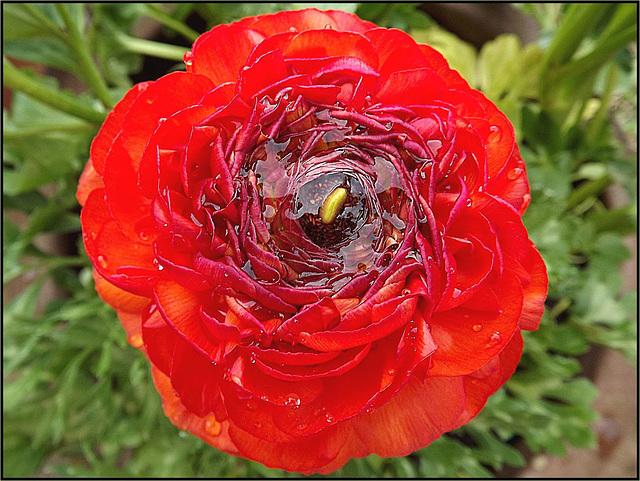 Flora 019