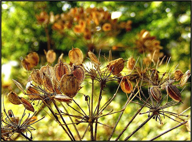 Flora 025