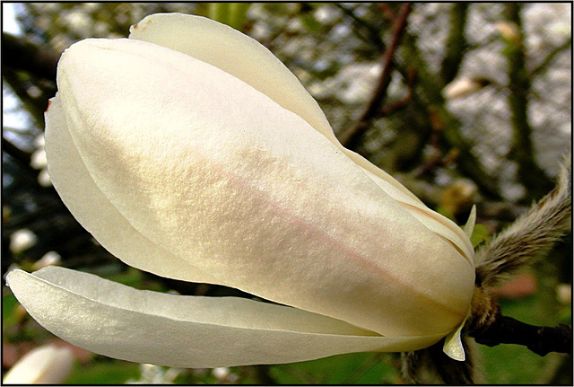 Flora 028