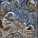 Driftwood Burl Texture