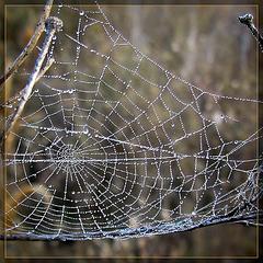 Misty Morning Spider Web