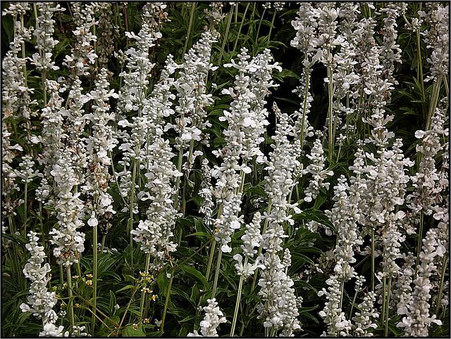 Flora 047