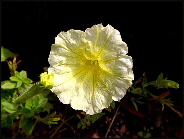 Flora 053