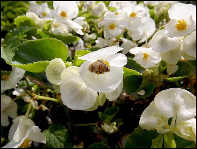 Flora 054