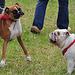 Oldtimershow Hoornsterzwaag – Dogs